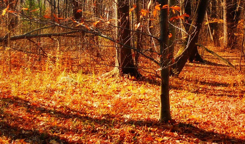 Autumn in New York, by blmiers2 / Courtesy of flickr