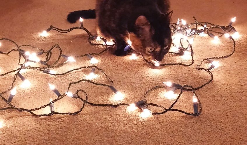 Lola with Christmas Lights, by Sarah Reck