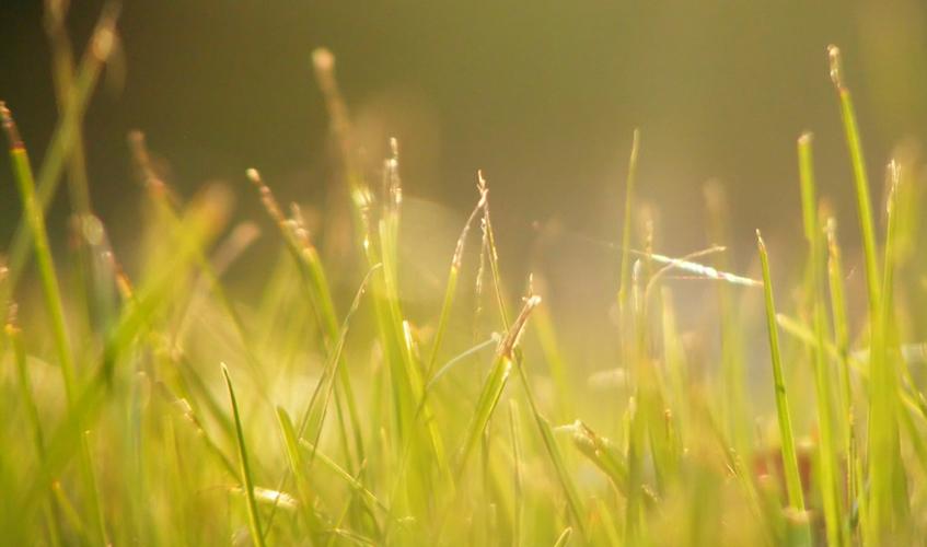 Sunshine, by Virginia Sanderson / flickr