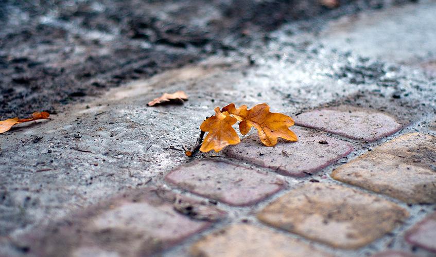 Leaf, by Marcin Milewski