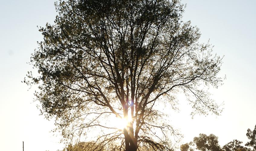 Tree, Buzz Andersen