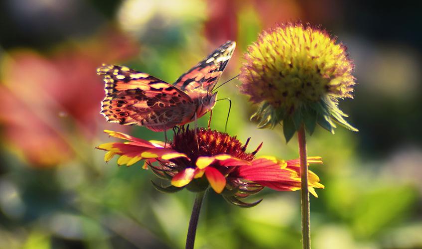 Butterfly & flower, zhangkaiyv
